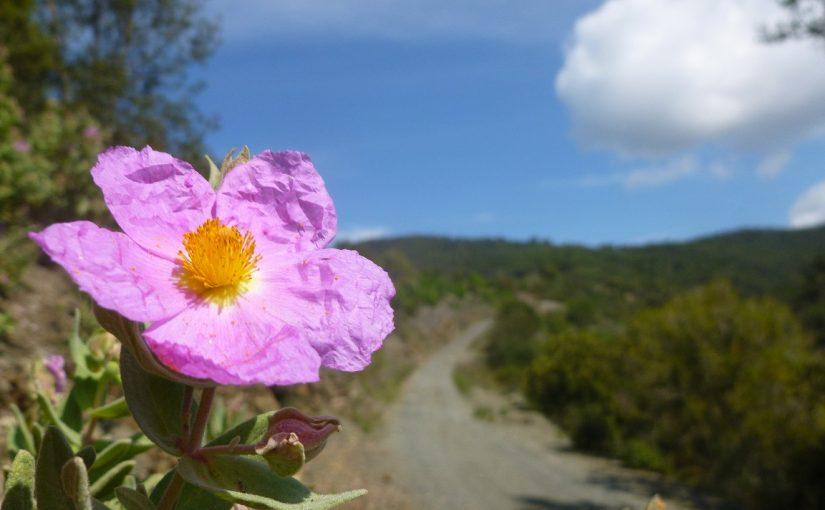 Excursió a la vall de Ca n'Aguilera